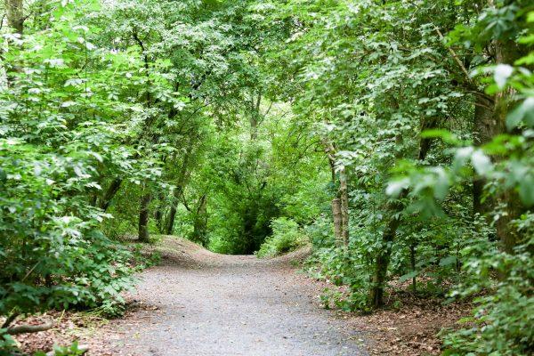 Oxford Island Woodland Walk