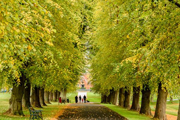 Mindfulness Walk - Lurgan Park